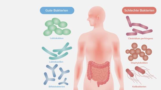 Nützliche Bakterien Beispiele
